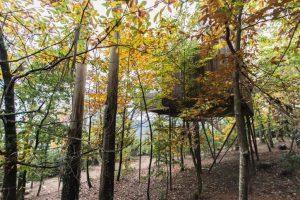 alojamiento en los árboles galicia