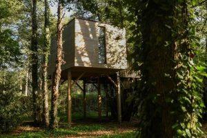 casa del árbol en galicia
